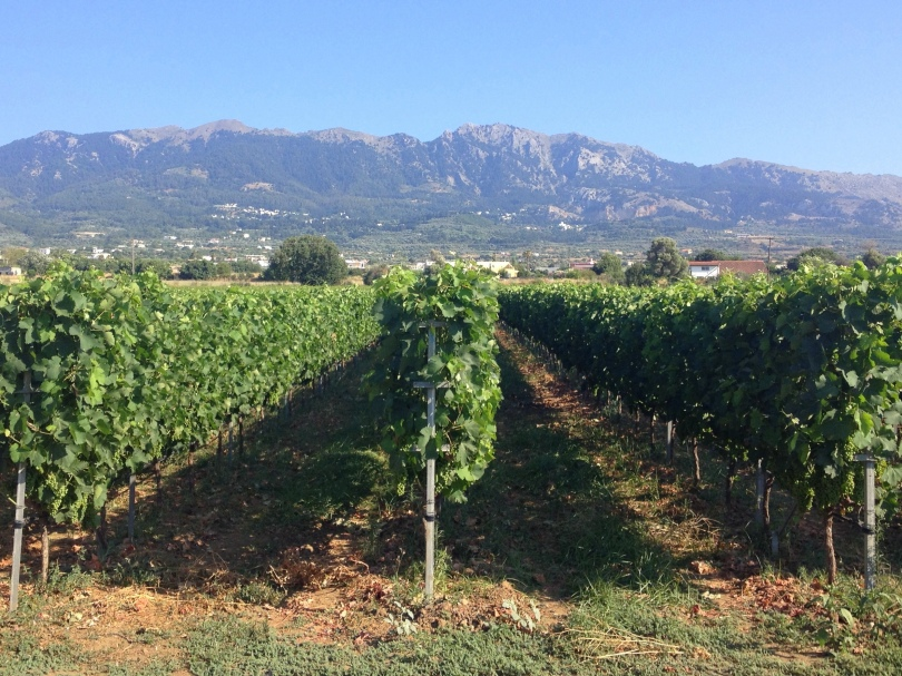 Vines on the back road of Tigaki with Dikeo mountain