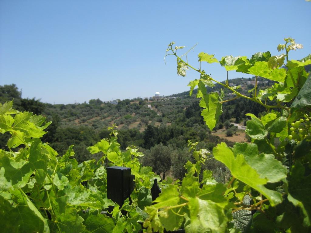 View from Lagoudi village, Kos